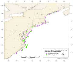 Map Of Warren County Nj Record Number Of Dead Whales Along Atlantic Coast Has Experts