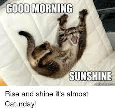 Good Morning Sunshine Meme - good morning sunshine rise and shine it s almost caturday