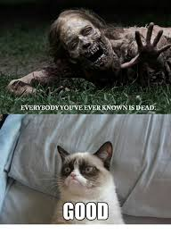 Memes Grumpy Cat - grumpy cat meme by grumpy cat fan on deviantart