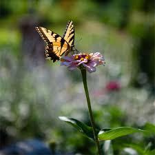 Clemson Botanical Garden by Home South Carolina Botanical Garden Clemson University South