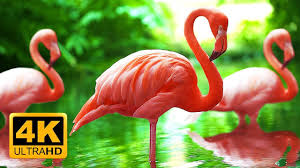 breathtaking colors of nature in 4k birds u0026 flowers sleep