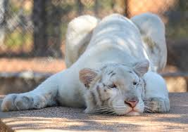 California wild animals images Where the wild things are do exotic animals belong in california jpg