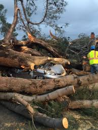 toppled tree in san diego kills in passing car nbc news