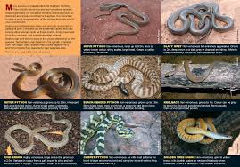 snakes land wildlife