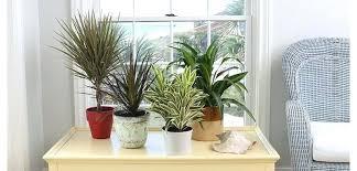 plantes d駱olluantes chambre images d albums photos plantes depolluantes chambre à coucher