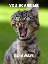 Scared Cat Meme - 25 best cats scared cat images on pinterest kitty cats funny
