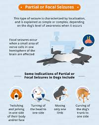 types of seizures in dogs canna pet