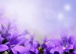 purple flower beautiful purple flower hd picture flowers stock photo free