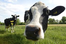 farming uk dairy news uk dairy articles and views