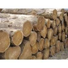 teak wood logs in chennai tamil nadu india indiamart