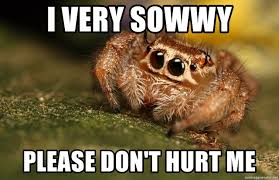 Cute Spider Meme - i very sowwy please don t hurt me cute scared spider meme