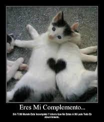 imagenes de gatitos sin frases 45 imágenes de gatitos tiernos con frases y mensajes bonitos