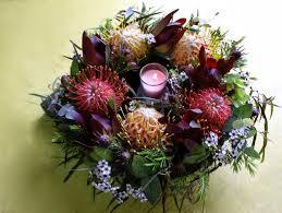 native australian plants swallows nest farm merry christmas and happy new year