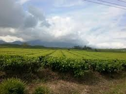 Teh Kayu Aro kayu aro tea plantation jambi 2018 all you need to before