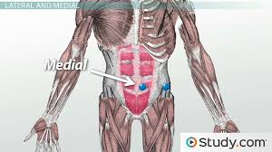 Human Anatomy And Physiology Terminology Anatomical Directional Terminology Lateral Medial U0026 More Video