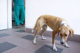 Fear Clinic by Creating A Fear Free Vet Experience For Your Dog Simply For Dogs