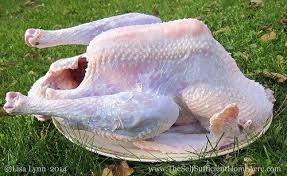dressing a heritage turkey for thanksgiving the self sufficient
