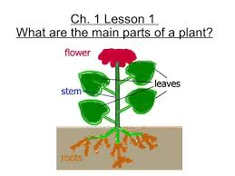3rd grade ch 1 lesson 1 what are the main parts of a plan