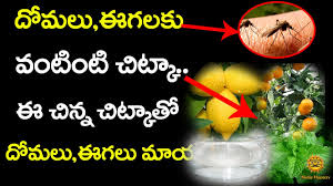how to avoid mosquitoes homemade flies and mosquito repellent