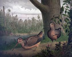 game birds woodcocks painting free stock photo public domain