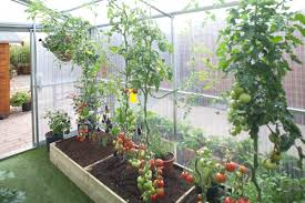 Inside Greenhouse Ideas Dazzling Design Interior Greenhouse 6 Similiar Layout Inside