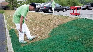 alternatives to grass in backyard no mow grass no problem 5 low maintenance lawn alternatives