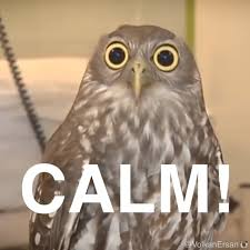 Owl Memes - calm owl memes