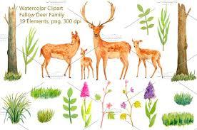 watercolor fallow deer family illustrations creative market