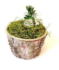 miniature fairy garden birch pot fairy garden expert