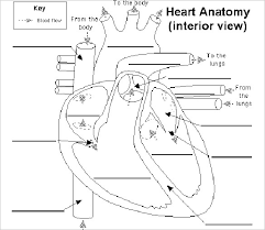 Anatomy And Physiology Labeling Heart Diagram U2013 15 Free Printable Word Excel Eps Psd Template