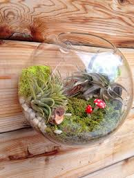 air plant bubble terrarium indoor wall planter wall glass fish