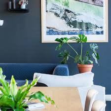 Indoor Plants That Don T Need Sunlight by You Need A Plant Break U2013 Botanica Boutique