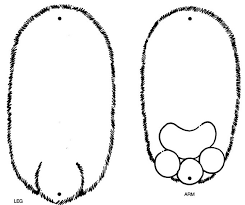 brown bear printables kids coloring
