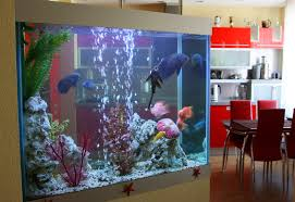 need some tranquility in your try a fish tank quicken
