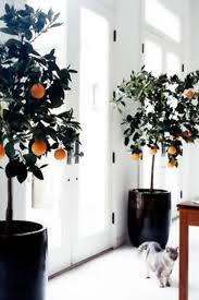 indoor trees that don t need light 7 houseplants you absolutely can t kill orange trees plants and