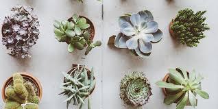 plante dans la chambre plante dans la chambre conceptions de la maison bizoko com