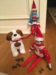 on the shelf pets pet reindeer and dog salon on the shelf