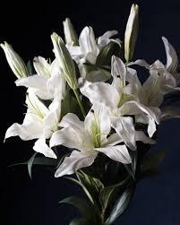casablanca lilies casablanca flower stems balsam hill