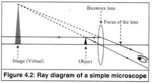 a light microscope image is formed by working principle and parts of a simple microscope with diagrams