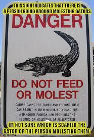 Gator Meme - wtf gator memes imgflip