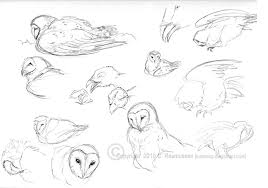 barn owl sketches by luckwing on deviantart
