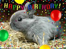 rabbit birthday happy birthday pictures with rabbits happy birthday honey bunny