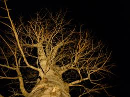 Outdoor Up Lighting For Trees Uplighting Expert Outdoor Lighting Advice