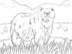 coloring pages golden rule peapup 6 picasa albums