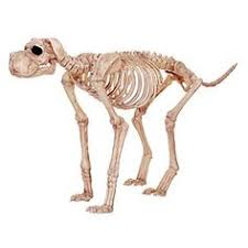 this fake cat skeleton would fit in well in a vignette with