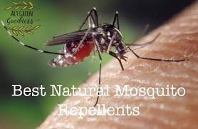 natural mosquito repellents best natural mosquito repellents alt green goodness