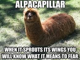 Alpaca Meme - alpaca sudden evolution funny dank memes gag