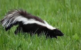 11 animals that hibernate that aren u0027t bears mnn mother nature