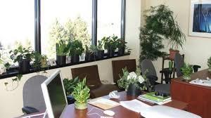 best plant for desk elegant plants for office desk pertaining to best plant new design