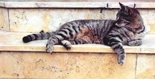 free stock photos of cat paw print pexels